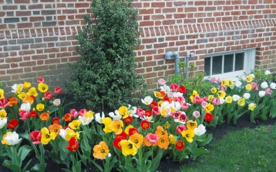 south_jersey_landscaping_example